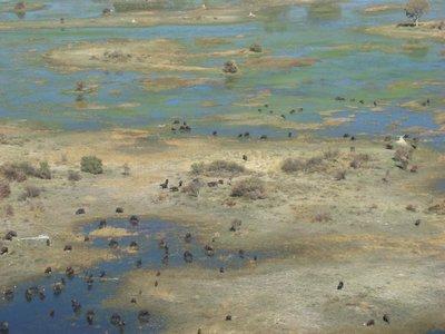 Okavango-animals.jpg