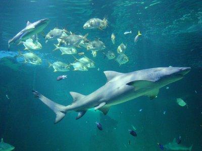 Sydney1-Shark-Tank.jpg