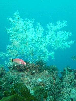 Underwater..ory-III.jpg