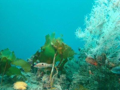 Underwater..tory-II.jpg
