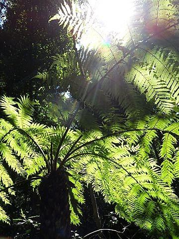 Ferns, Blue Mountains