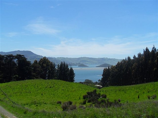 Otago Peninsular View