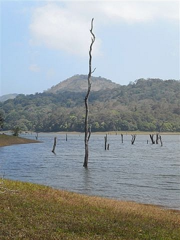 Periyar Lake View (Notice NO elephants!)