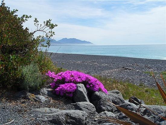 Beach Front, Kaikoura