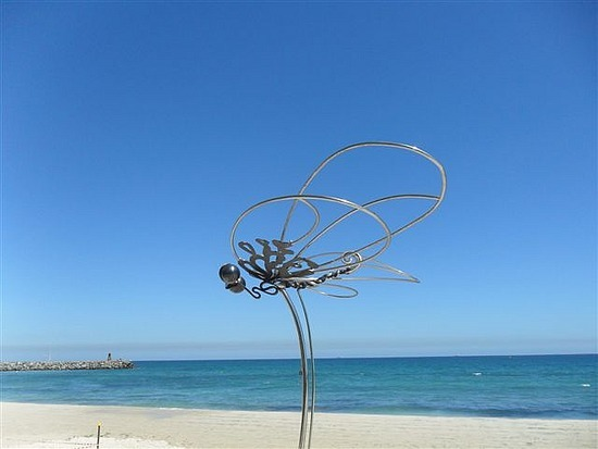 Dragonfly - Cottesloe