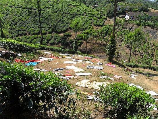 Service Wash - Thekkady Tea Plantation