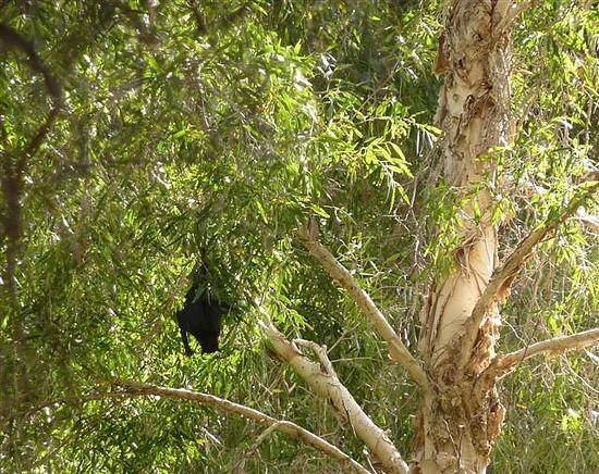 Bats Fern Pool Karinijini