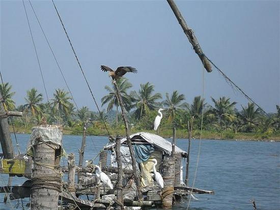 Birdlife, Backwaters, Kerala