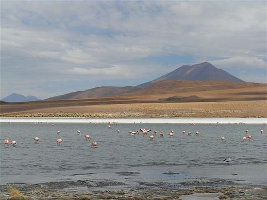 Flamingos on the Lagoon