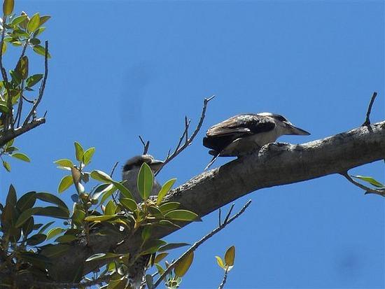Kookaburrah, Freemantle
