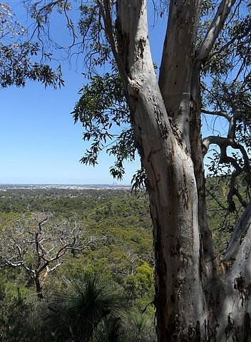 View of Perth from the hills