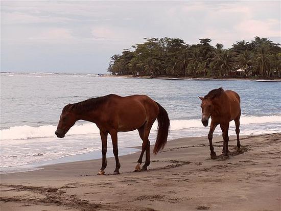 Puerto Viejo Horses on Beach