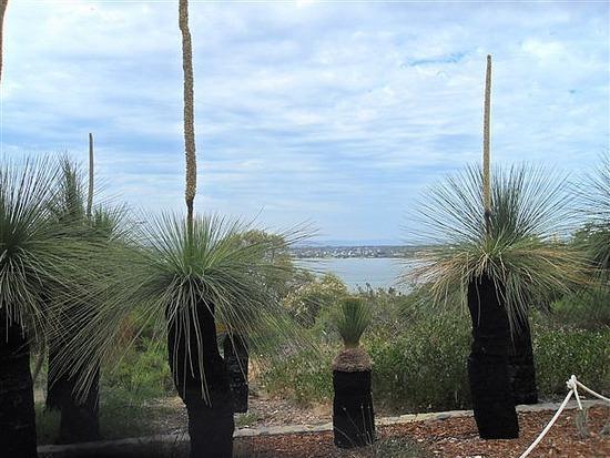 Black Boy Trees, Kings Park, Perth
