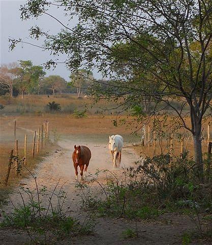 Horses at Sunset Pantanal