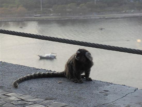 High Altitude Monkey
