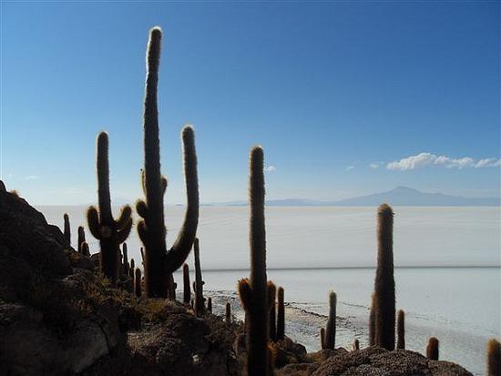 Fish Island Cacti