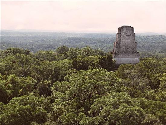 Tikal`s tallest temple