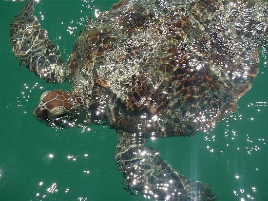 Turtle Moneky Mia