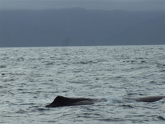 There She Blows! Sperm Whale, Kaikoura