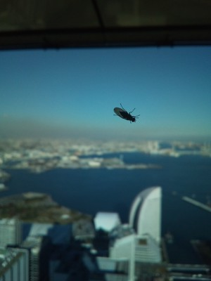 A sneaky fly inside the tower