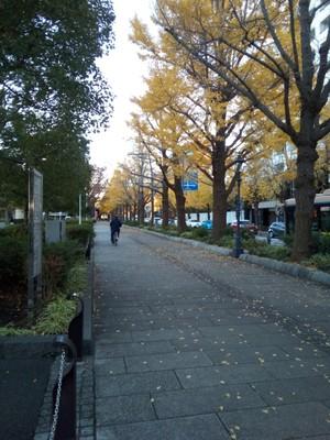 Pretty avenue