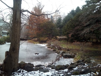 A frozen lake at the Hokkaido University Botanical Gardens
