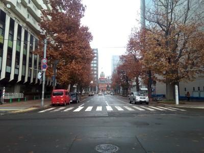A pretty avenue in Sapporo