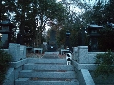 The cat outside Rinno-ji